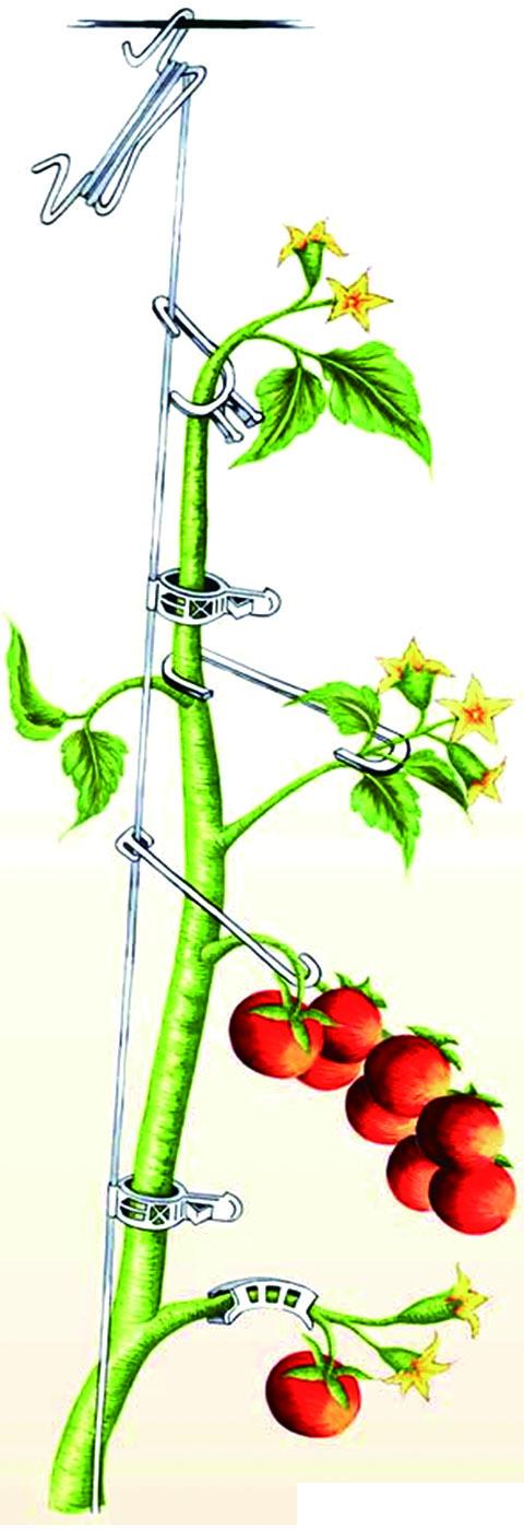 農業用誘引紐(ポリエチレン製)